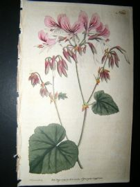 Curtis 1791 Hand Col Botanical Print. Heart Leaved Geranium 165